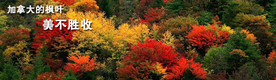 autumn in china forest